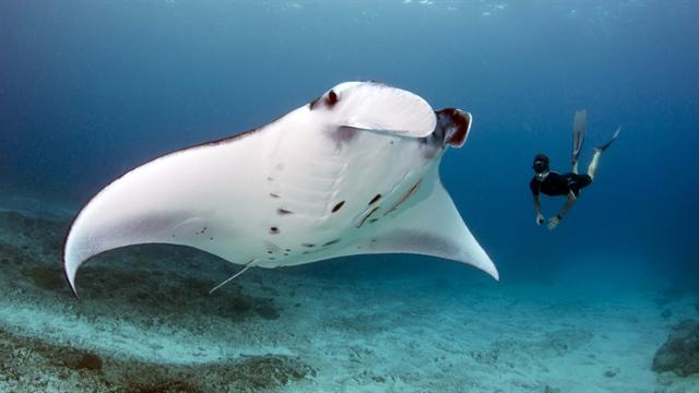 FairLifts Assisted With Manta Ray Airlift in the Bahamas
