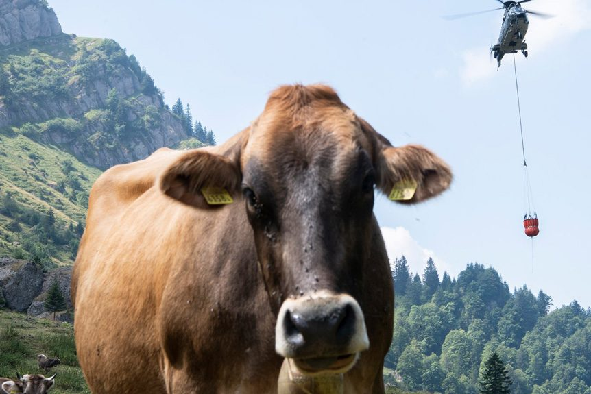 Swiss Helicopters Airlift Water to Thirsty Cows