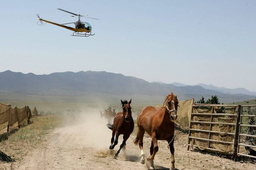 Helicopter Set to Transport 60 Horses from Colorado Range