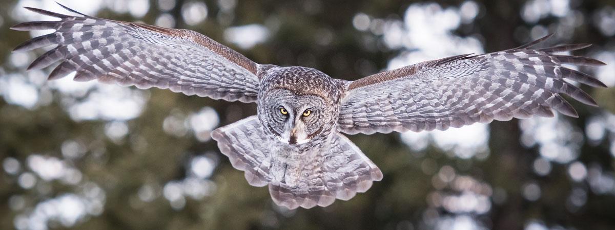 Georgia Wildlife Management