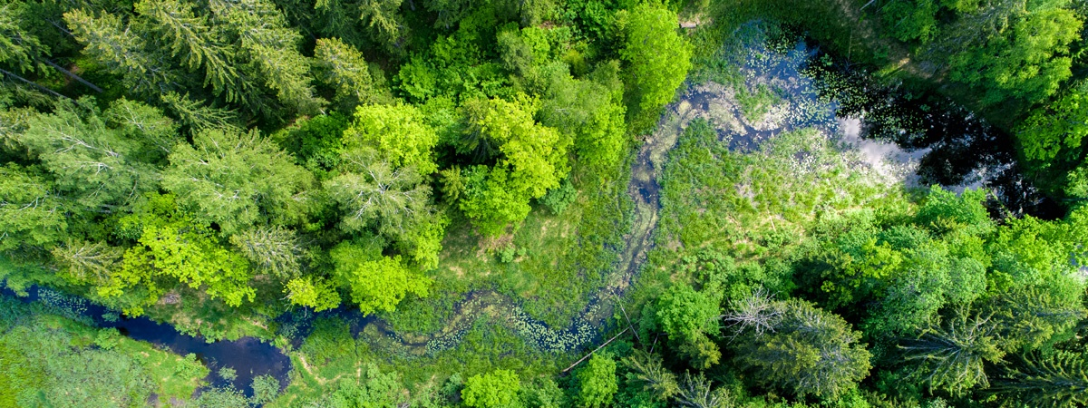 Aerial Surveys - Environmental Helicopter Services